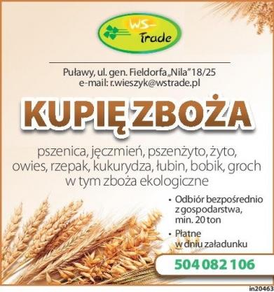 skup zboża: pszenicy, psznżyta, owsa, jęczmienia, żyta, kukurydzy, łubinu, grochu  Kliknięcie w obrazek spowoduje wyświetlenie jego powiększenia