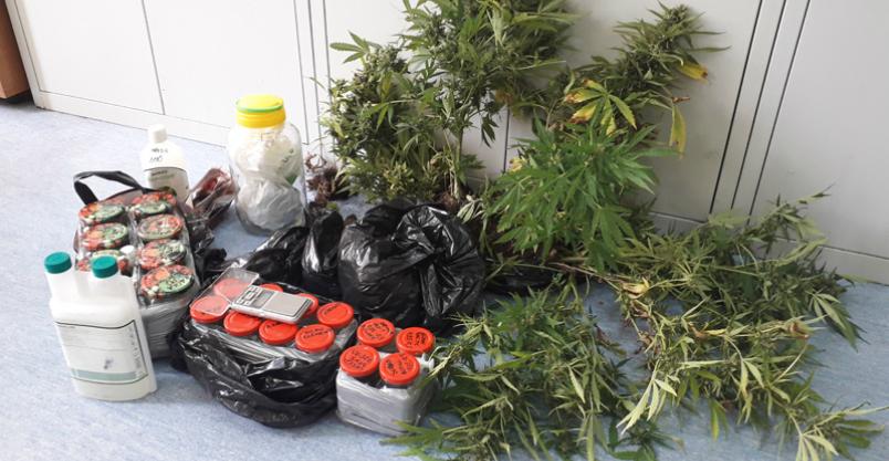 Plantacja marihuany pod Nowym Miastem Kliknięcie w obrazek spowoduje wyświetlenie jego powiększenia