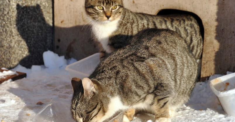 20 domków dla kotów i karma na zimę Kliknięcie w obrazek spowoduje wyświetlenie jego powiększenia