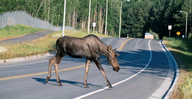 46 zdarzeń drogowych. Uwaga na dzikie zwierzęta! AKTUALIZACJA Kliknięcie w obrazek spowoduje wyświetlenie jego powiększenia